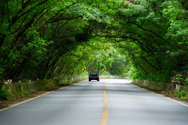 Car Rental Thailand ECOCAR Tree Tunnel