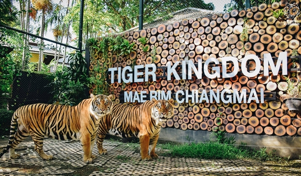 7 Attractions on Highway 107 by ECOCAR Car Rental Chiang Mai Tiger Kingdom
