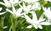 worshiping-spring-wallpaper-1.jpg