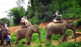 phuket-trekking-adventure-elephant-riding